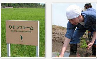 リペアジェルの原材料は無農薬栽培のお米