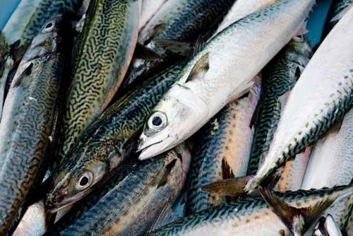 DPA/EPAといえば青魚